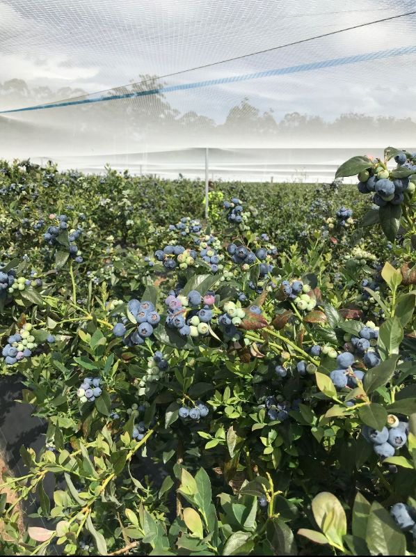 Blueberry Farm Vacancy