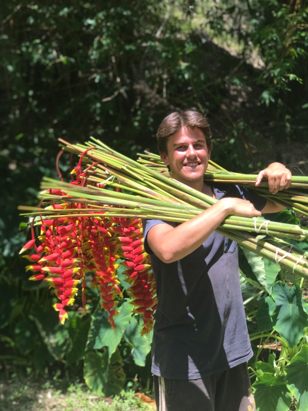 Volunteer's Wanted For Tropical Flower Farm In The Byron Bay Hinterlands,can Sign 2nd & 3rd