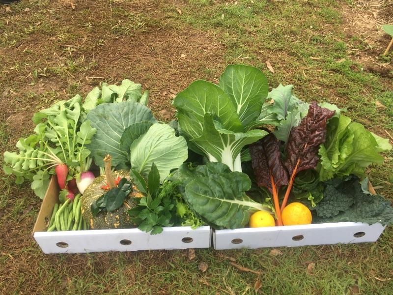 Exchange, Animal Sanctuary And Organic Farm