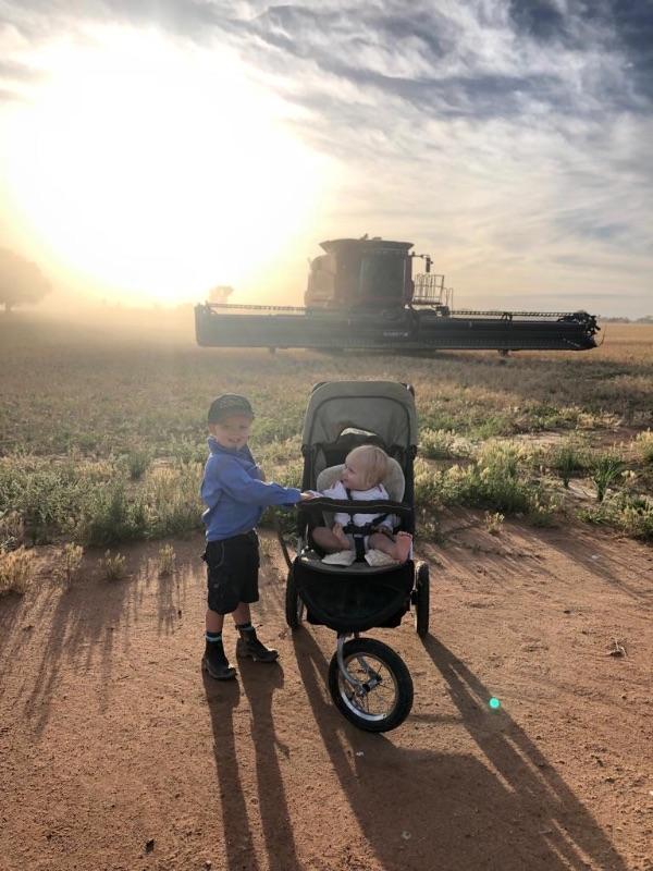 Grain Harvest Position (au Pair Or Sample Stand/weighbridge Operator)
