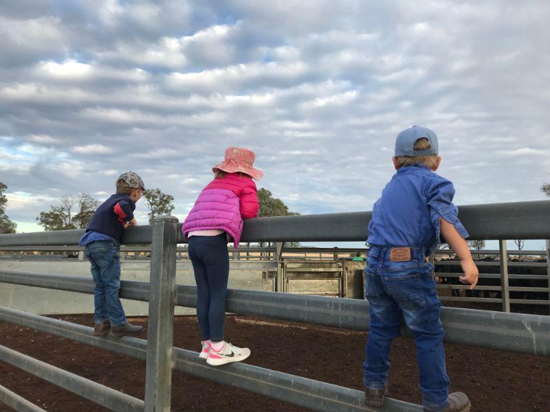 Farm Work - Machine Operator