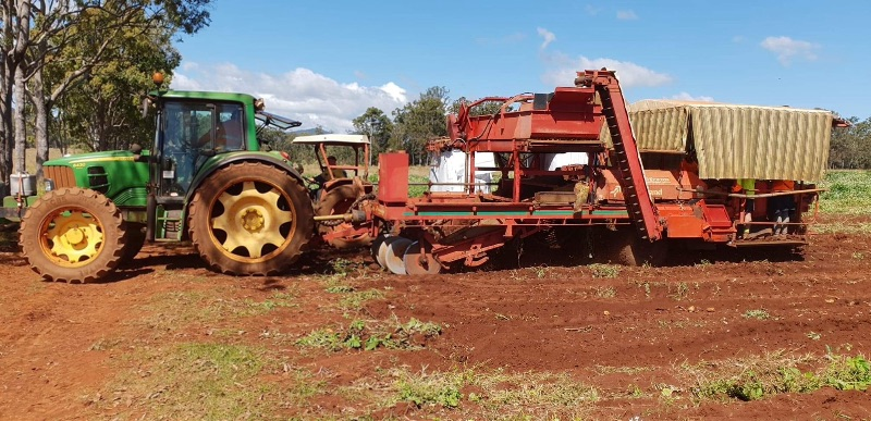Potato Harvesting / Shed Grading