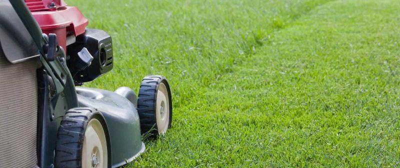 Landscaper - Gardening - Horticulture