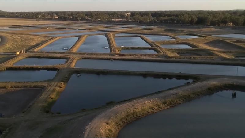 Aquaculture Farm Assistant