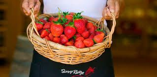 Strawberry Tractor Delivery Driver
