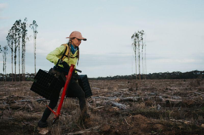 Tree Planters & Crew