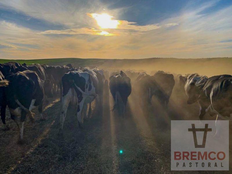 Dairy Farm Milker