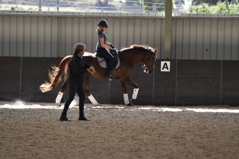 Live In Stablehand/ Groom