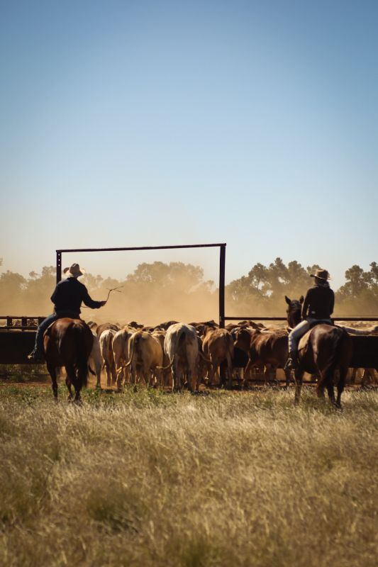 Experienced Station Hand - Family Cattle Station