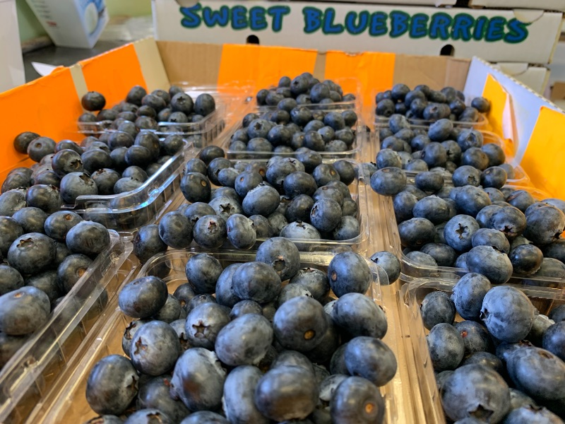 Live On Farm Blueberry Picking For 2nd/3rd Year Visa