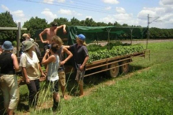 Bundaberg Workers And Divers Hostel - Hourly Paid $24.8 - Rent $160  Sweet Potatoes Pick And Pack