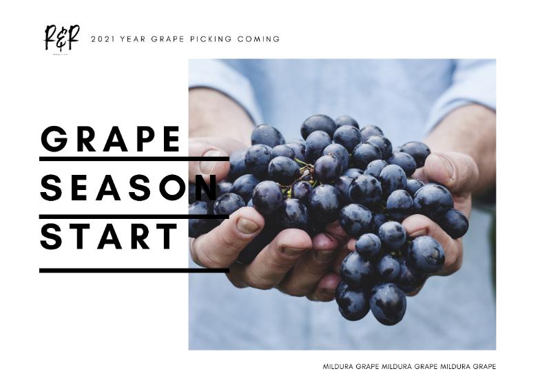 Picking Grape Wanted