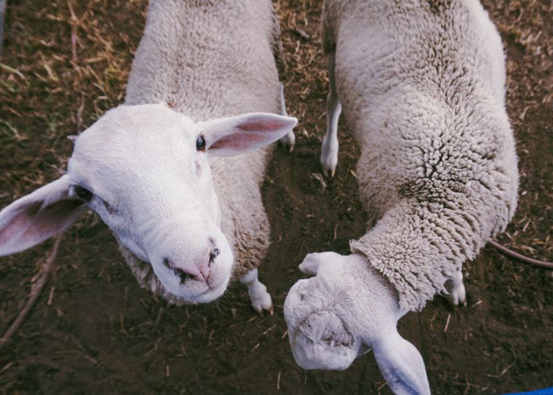 Farm Work - Rural Fencing Experience.