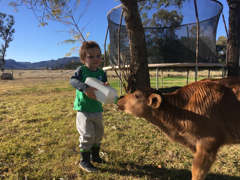 Beautiful Organic Cattle Station Central Qld - Looking For Our Next Mary Poppins! $$$/2nd Yr.v