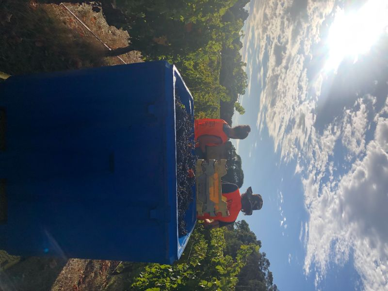 Grape Pickers Required