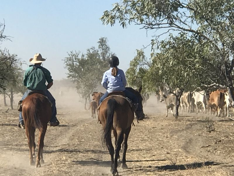 Domestic/cleaner - Cattle Station Nw Qld