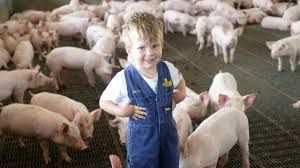 Piggery Workers