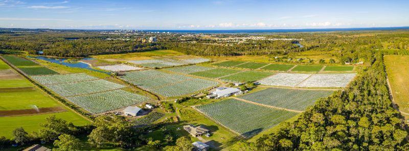 2021 Strawberry Farm Jobs - Picking