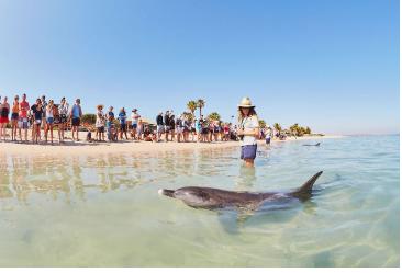 Retail Assistant - Monkey Mia Dolphin Resort - Live On Site At Monkey Mia