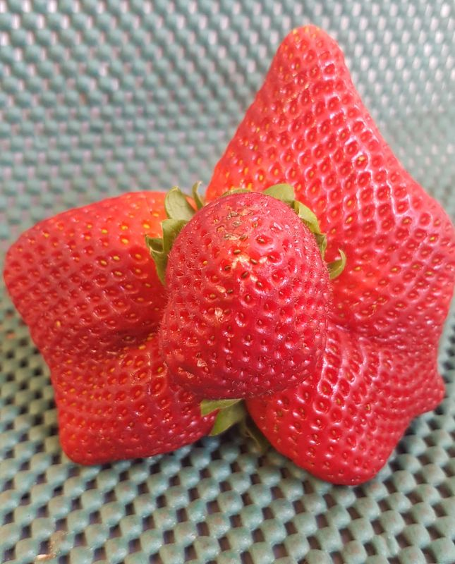 2021 Strawberry Farm Jobs