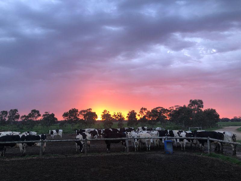 Dairy Farm Hand