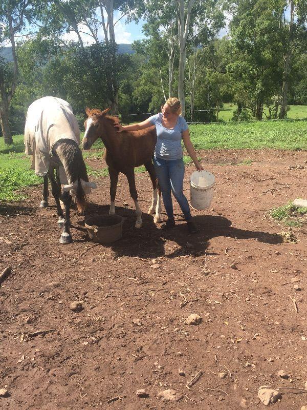 Farm Work Sunshine Coast