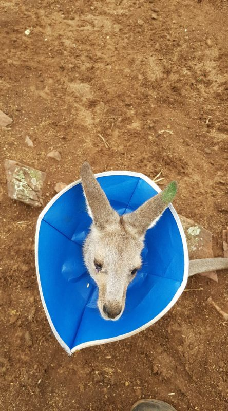 Live-in Carer For Sick, Injured And Orphaned Wildlife