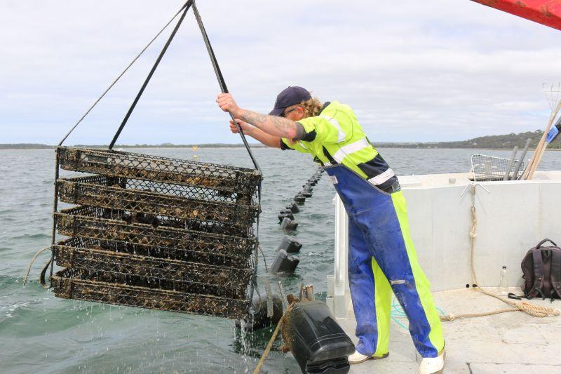 Kangaroo Island - Aquaculture Allrounder
