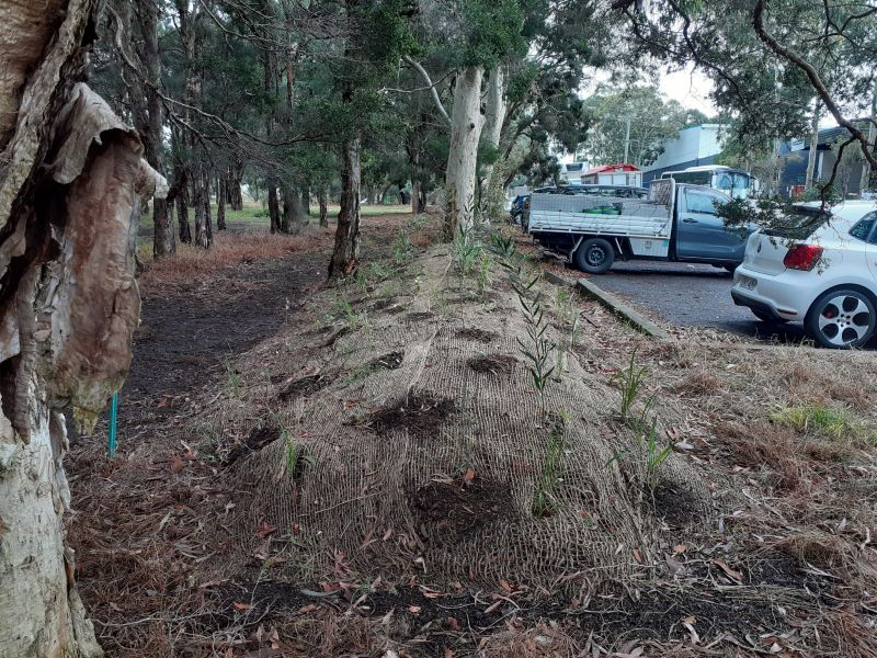 Ecological Restoration Practitioner - No Experience Needed