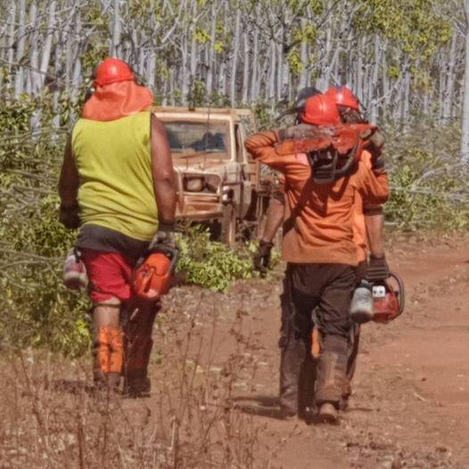 Chainsaw Operators Mahogany Douglas-daly Nt