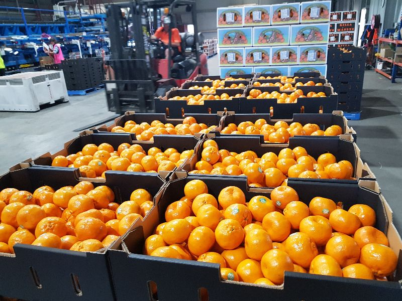 Citrus Fruit Pickers Required With Immediate Start! No Experience Ok!