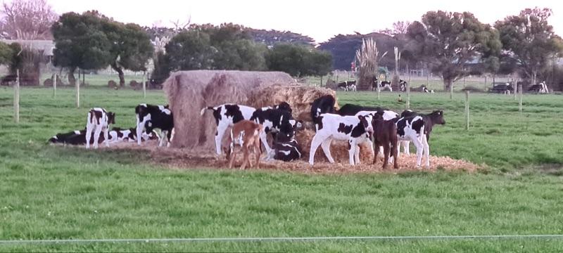 Milker/farmhand