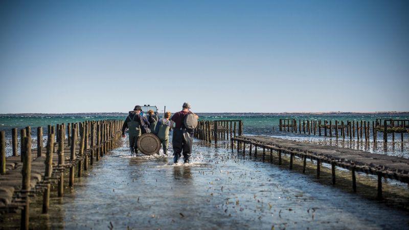 Aquaculture Attendants - Coffin Bay, Cowell & Haslam