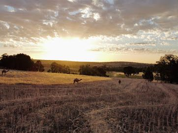 Au-pair Position/farm Hand On Camel Dairy In The Perth Hills (wa)