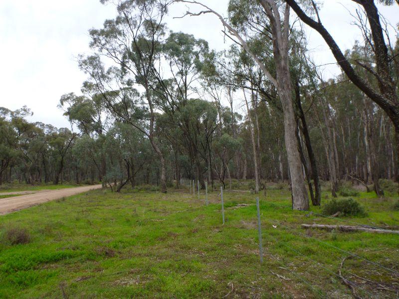 Tree Planting/vegetation Management