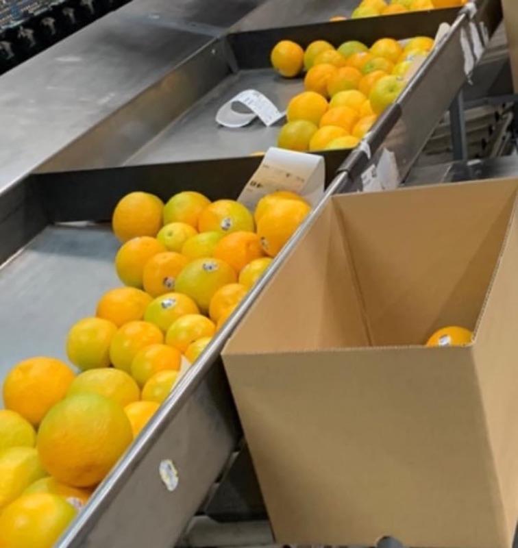 Fruit Packers, Machine Operators And Sorters