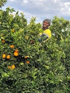 Citrus Pickers - Bonus Offer For Pickers.