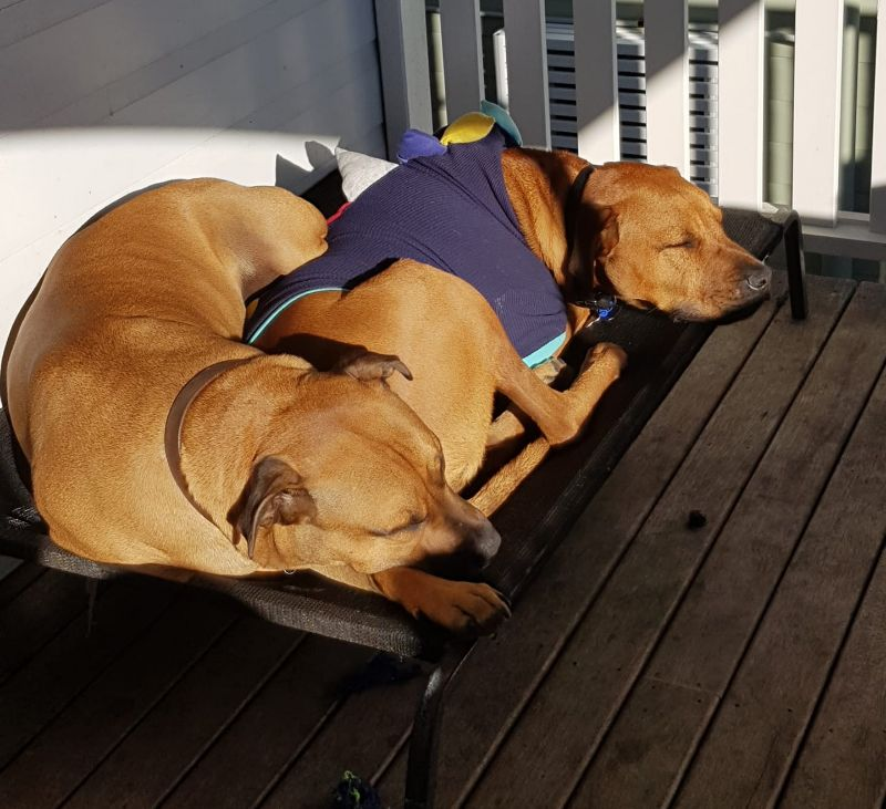 Live In House Help For 8 - 12 Weeks - Doggy Au Pair?