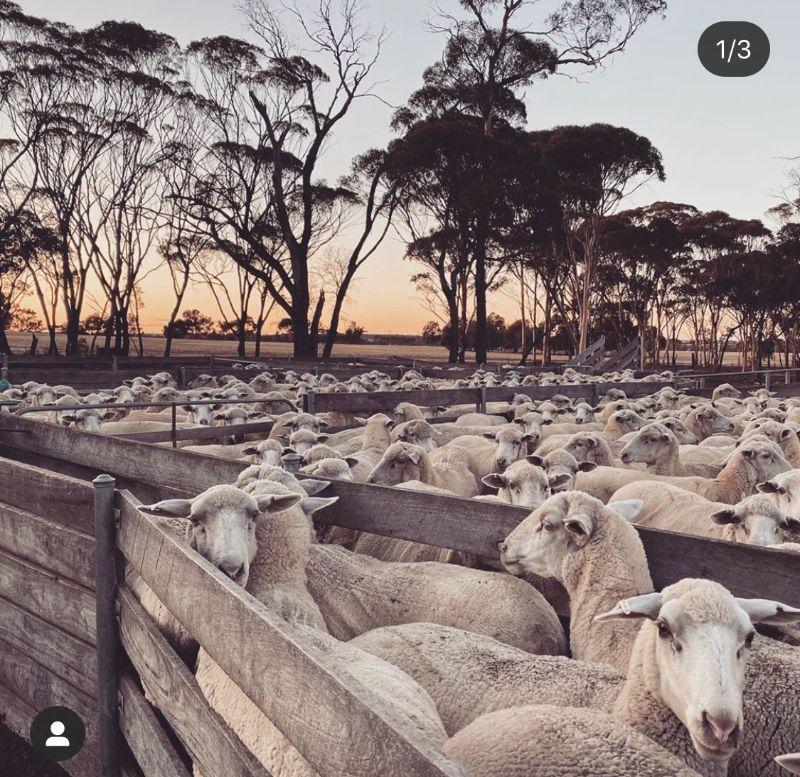General Farm Hand - Mixed Crop & Sheep Farm
