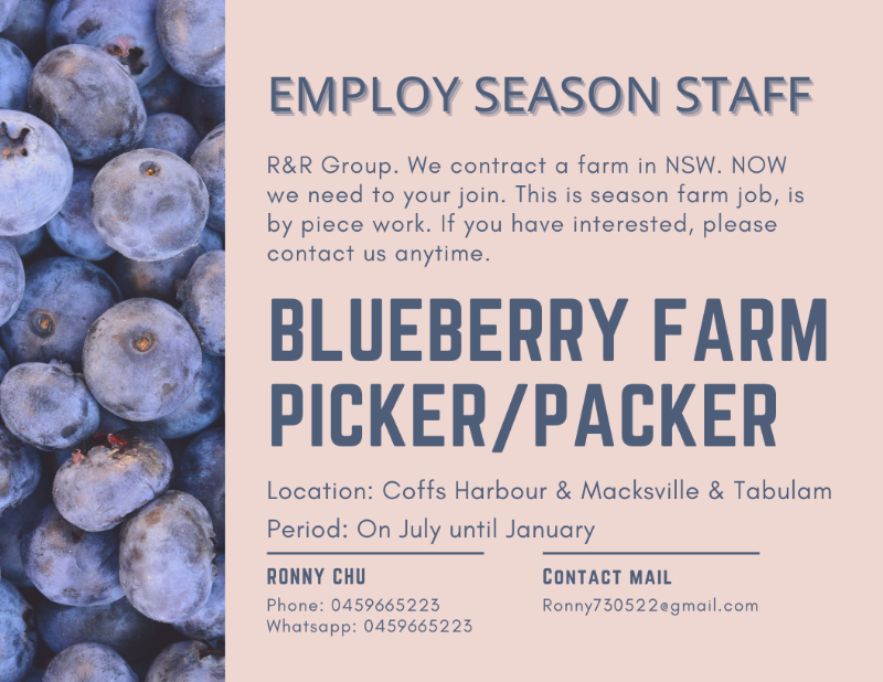 Blueberry Farm Picker And Pakcer