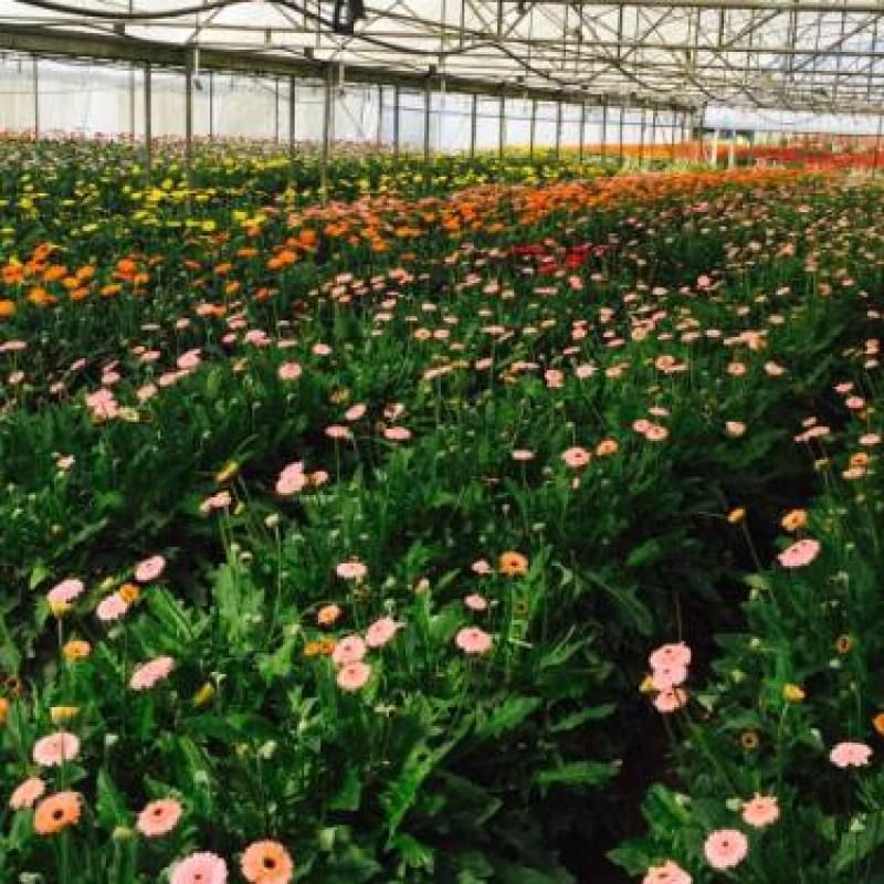 2 Labourers Required For Flower Farm