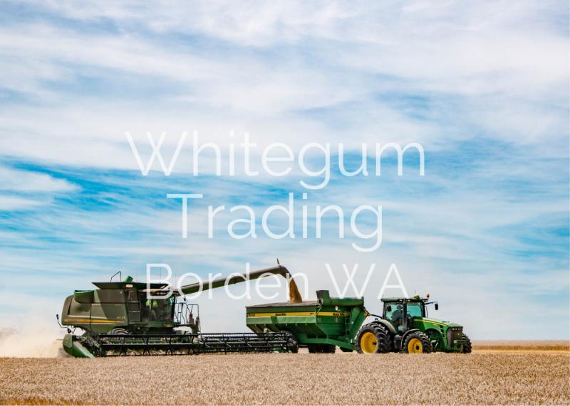 Swathing & Grain Harvest