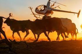 Cattle Station Jobs | Start Asap