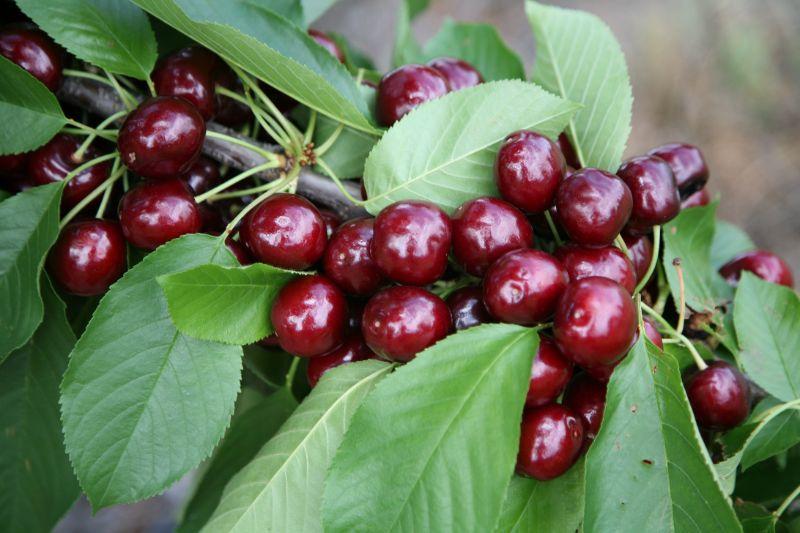 Cherry Picking And Cherry Packing