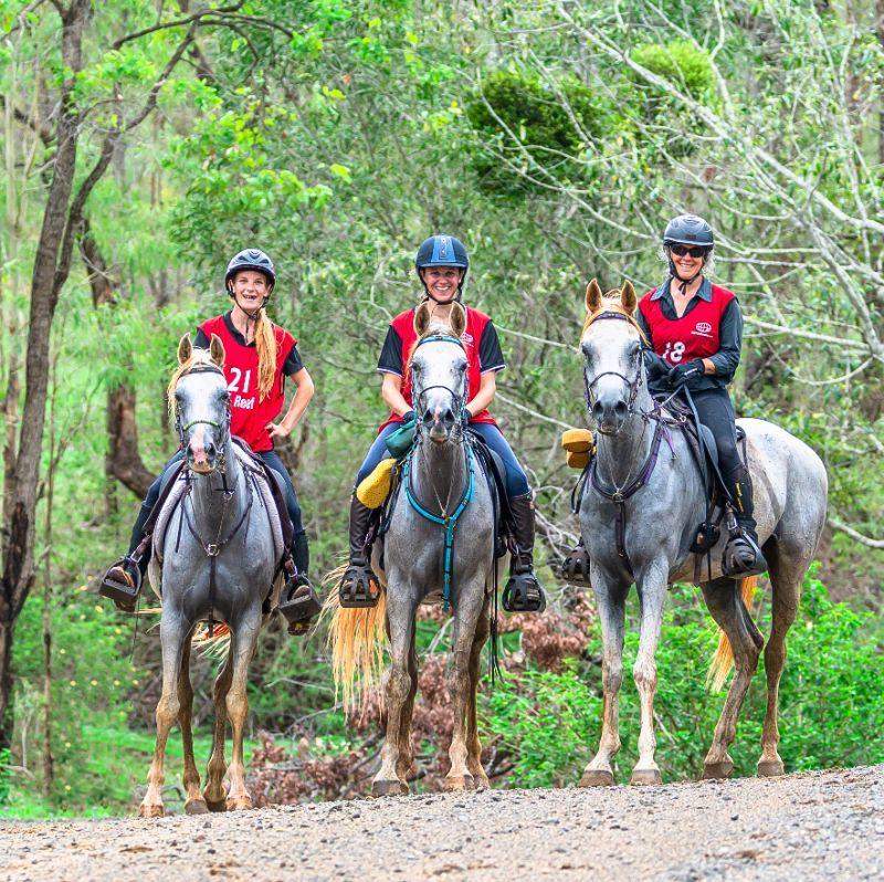 Arabian Endurance Horses
