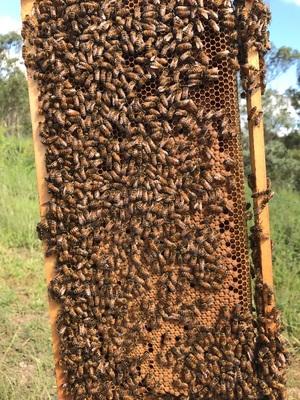 Beekeeping Assistant